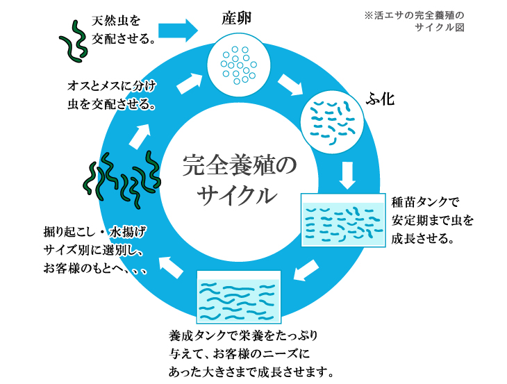 完全養殖のサイクル図